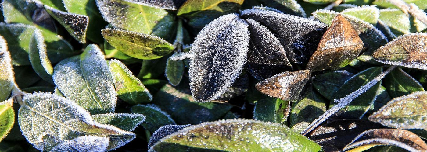 slider-8-hiver